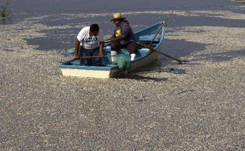 "Fishermen collect dead ""popocha"" fish at the Cajititlan lagoon at Tlajomulco de Zuniga in Jalisco state, western Mexic"