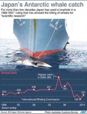 Graphic charting Japan's annual Antarctic whale catch