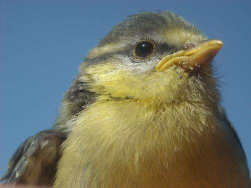 """""""Light pollution"""" may affect love lives of birds in the Viennese Forests"""
