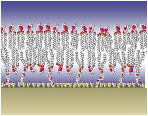 NIST Cell Membrane Model Studied as Future Diagnostic Tool