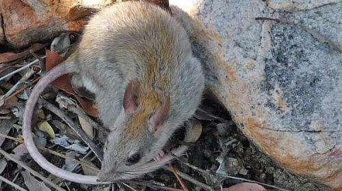 Northern Kimberley sub-region reveals unexpected species