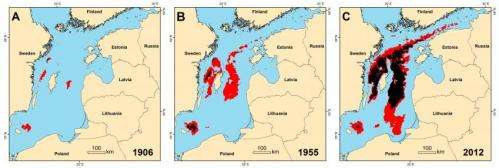 Oxygen depletion in the Baltic Sea is 10 times worse than a century ago