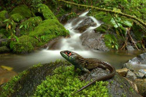 Peru's Manu National Park sets new biodiversity record