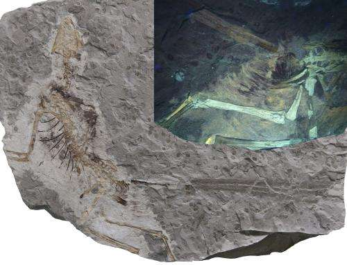 Prequel outshines the original: Exceptional fossils of 160 million year old doahugou biota