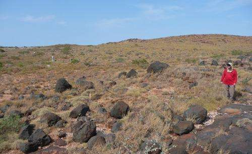 Shell clusters reveal Pilbara's cyclone past