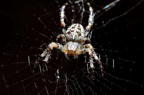 Spider silk ties scientists up in knots