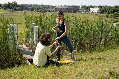 Studying wetlands as a producer of greenhouse gases