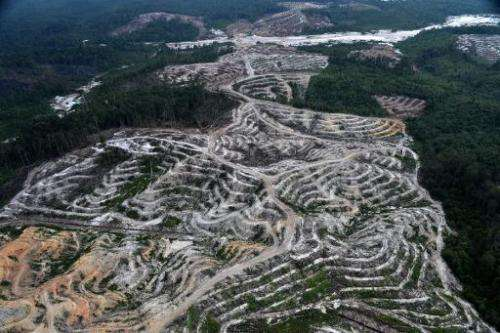 This photograph taken on February 24, 2014 during an aerial survey mission by Greenpeace in Central Kalimantan province on Indon