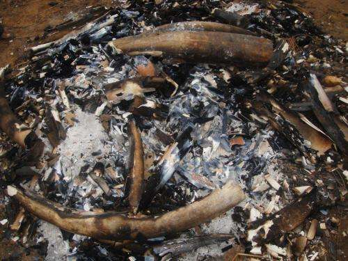 Urgent international action needed following elephant poaching statistics in Mozambique
