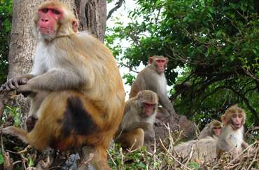 Watching primates make social decisions in the lab and in the field