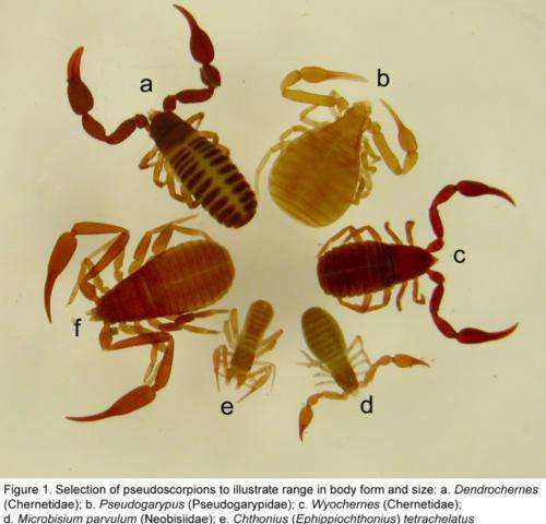 What is a pseudoscorpion?