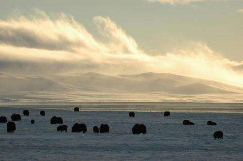 Researchers reveal the dynamics behind Arctic ecosystems