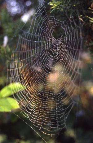 Spiders know the meaning of web music