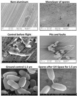 Space Station research shows that hardy little space travelers could colonize Mars