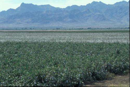 Scientists discover genetic basis of pest resistance to biotech cotton