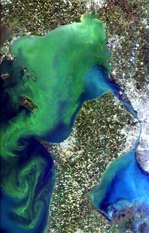 Algal growth a blooming problem Space Station to help monitor