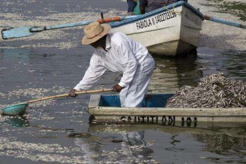 "Fishermen collect dead ""popocha"" fish at the Cajititlan lagoon in Tlajomulco de Zuniga in Jalisco State, western Mexic"