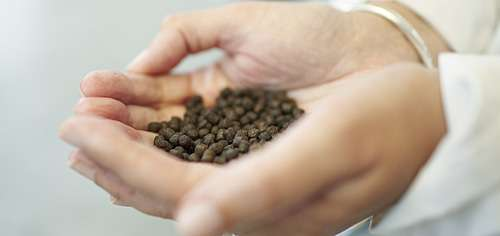 New knowledge revolutionising feeds