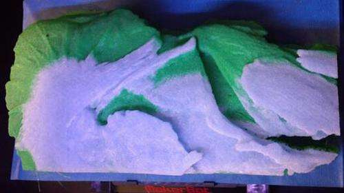 Paleontologist and librarian team up to create 3-D printout of rare fossil