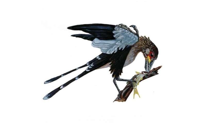 Prehistoric birds lacked in diversity