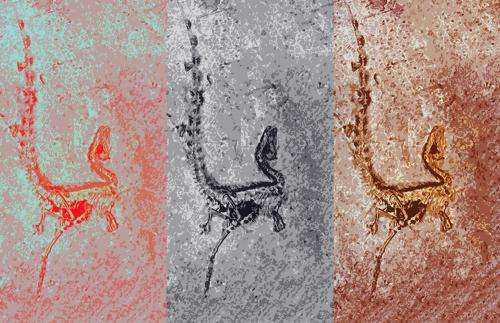 Revision to rules for color in dinosaurs suggests connection between color and physiology