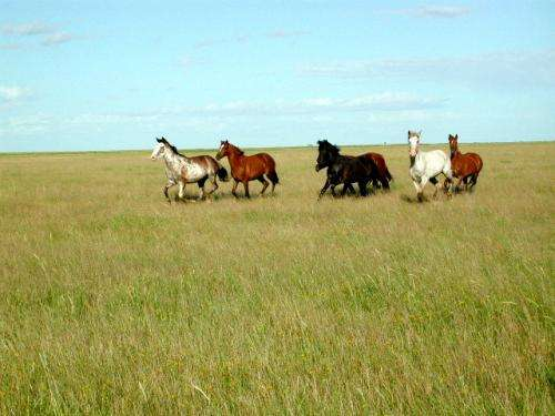 Trees and shrubs invading critical grasslands, diminish cattle production