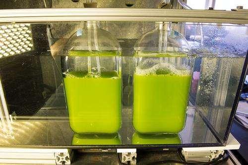 Unique bioreactor finds ideal locations for algae production