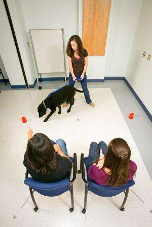 Why dogs are the new darlings of cognitive science