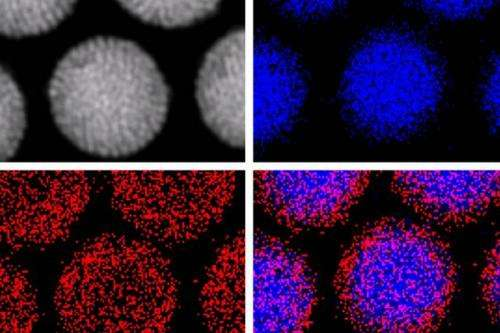 Nanoparticles get a magnetic handle