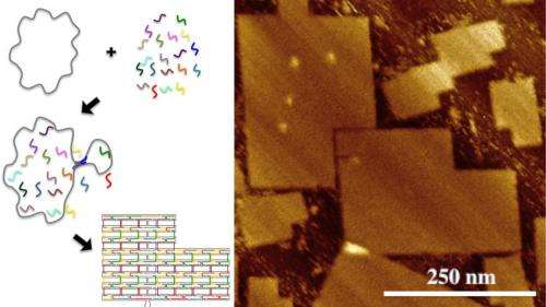 Researchers create world's largest DNA origami