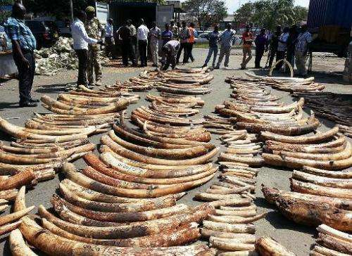 A Kenya Wildlife Services photo shows ivory seized at Mombasa port on July 8, 2013