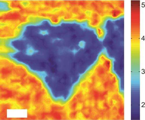 Competition for graphene: Researchers demonstrate ultrafast charge transfer in new family of 2-D semiconductors