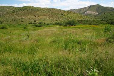 Scientists call for preservation of disappearing grasslands