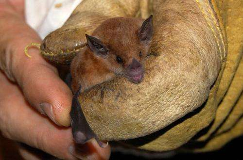 Stanford researchers rethink 'natural' habitat for wildlife