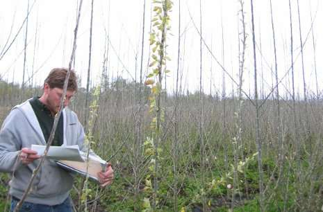 Discovery of a bud-break gene could lead to trees adapted for a changing climate