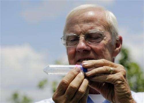 Invasive insect threatens iconic Florida citrus