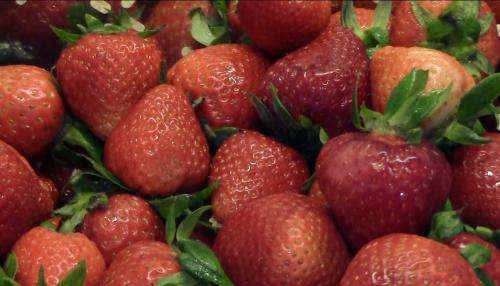 Mathematicians help California drought-weary berry growers address water issues