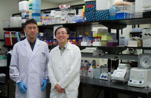 Researchers find novel approach for controlling deadly C. difficile infections