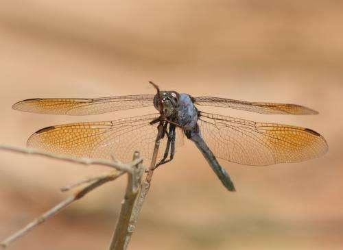 Inland waterways brimming with invertebrates despite drying trend