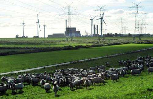 A photo taken on September 21, 2010 shows a flock of sheep grazing near the Brunsbuettel nuclear power plant on in Brunsbuettel,
