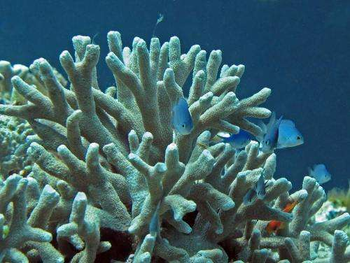 Coral's durability to acidification examined
