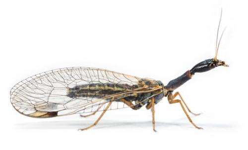 Of dragonflies and dinosaurs: Researchers map insect origins, evolution