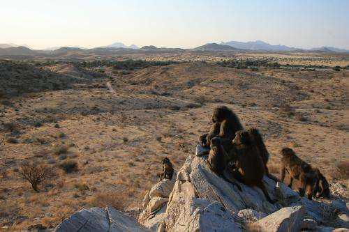 Researchers show that bold baboons learn to solve tasks from other baboons