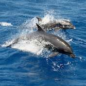 Accidental dolphin capture a problem for trawl fishery