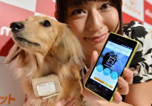 "A dog wears a ""Petfit tag"" equipped with 3G and Bluetooth from Japan's largest mobile phone carrier NTT Docomo during"