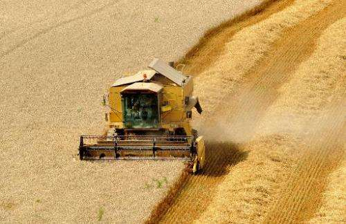 A farmer harvests a wheat field with a combine harvester in Mametz, northern France, on August 13, 2013