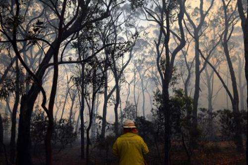 A firefighter battles approaching flames from a bushfire near Faulconbridge in the Blue Mountains on October 24, 2013