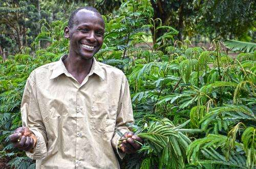 Agroforestry can ensure food security and mitigate the effects of climate change in Africa