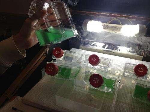 Algae 'see' a wide range of light