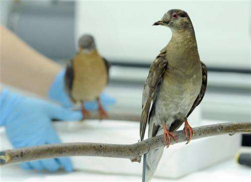 All gone: How erasing billions of birds shocked us